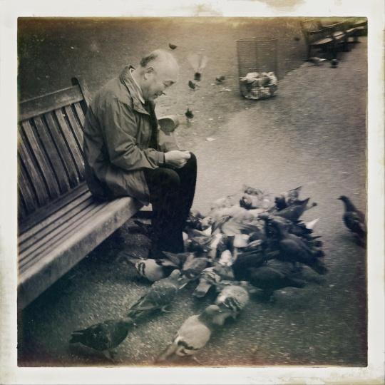 Le vieil homme et les pigeons