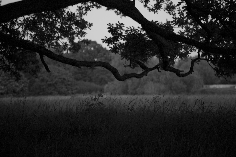 liminal landscapes of hampstead heath london creative thresholds untitled 1