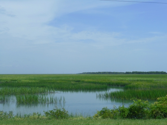 low country greener