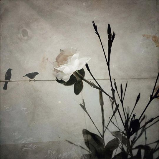 laura-silvestre-bataller-13